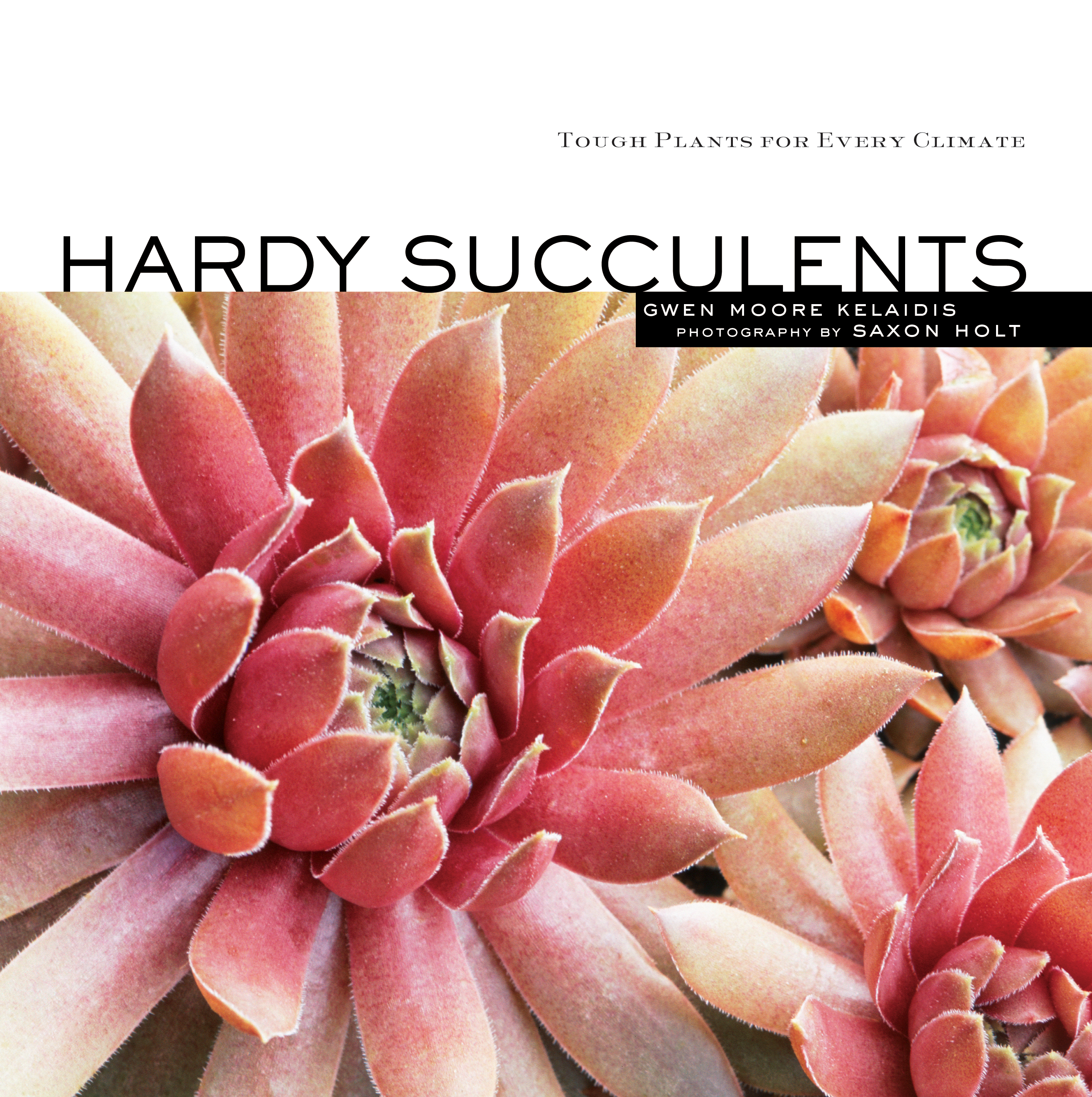 Hardy Succulents Tough Plants for Every Climate